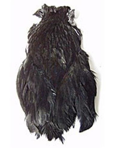 Veľká čierna cocke